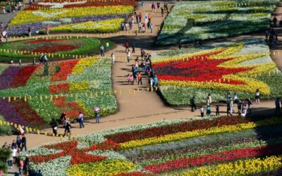 Floriade: Canberra's Own Flower Festival